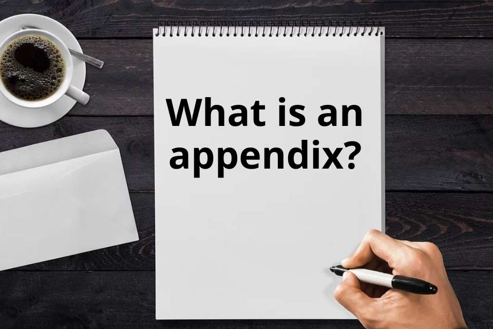What-is an-appendix