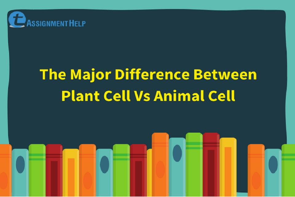 Difference Between Plant Cell Vs Animal Cell