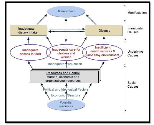 conceptual framework in nutrition case study